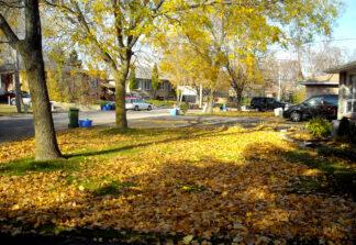 image of suburban homes in Hamilton Ontario