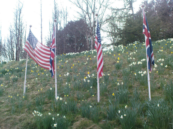 two US flags and two UK flags in a field of spring bulbs