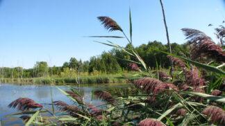 waterway shot through shore plants