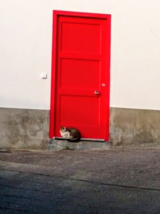 Cat waiting outside white building with red door