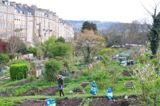 Behind a sweep of flats in Bath, UK, a single woman is visible in an array of garden allotments