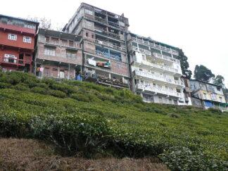 houses beside tea plantations in Darjeeling, India