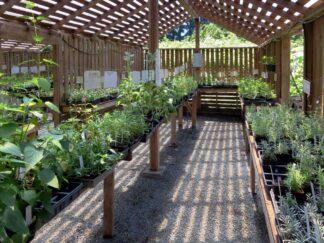 Herb garden in the Cowichan valley