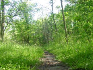 A leafy walking trail through the woods.