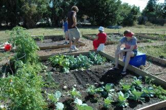 folks at work in community garden plots
