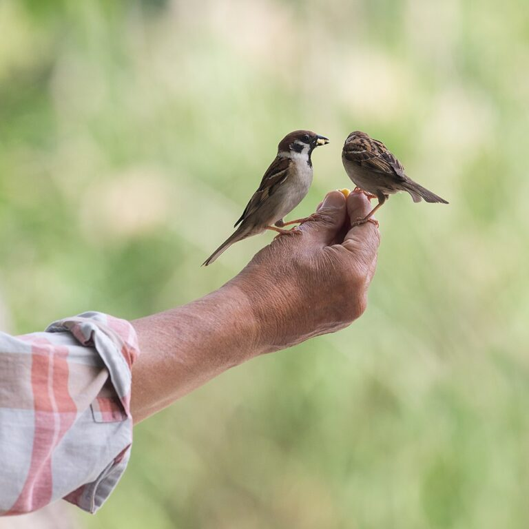 CA Landlords: 2 Birds In Hand Worth More Than 1 In COVID-19 Bush