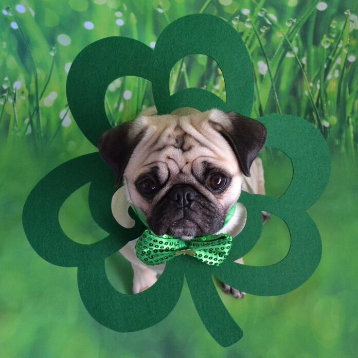 dog with mournful expression against a shamrock green background