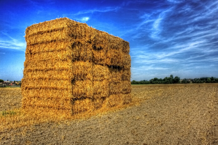 A wall of stacked hay bales stands in a field of stubble