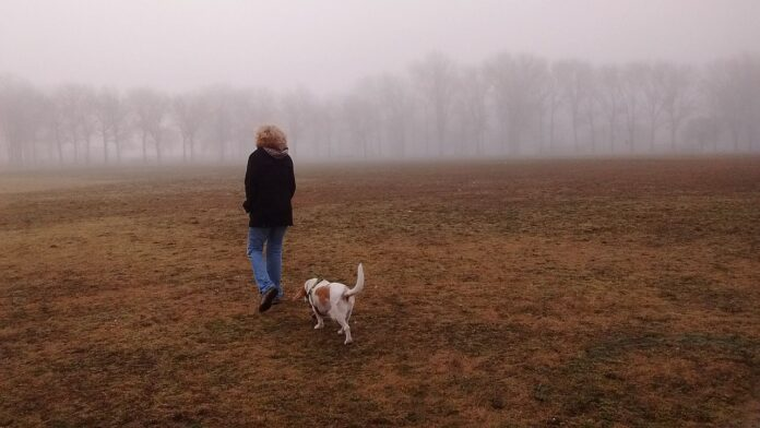 solitary person walking with a dog in the mist