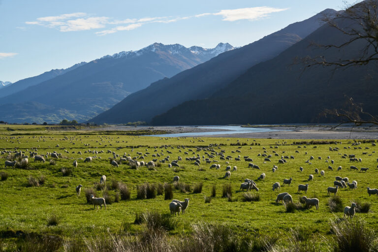 Can New Zealand Fix Multiple Housing Crises By Applying The 4 D's?